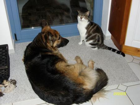 Urmel und Buddy