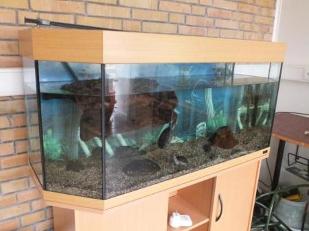 moschussschildkröte
