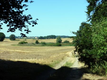 Weg aus dem Wald beim Rugen Moor
