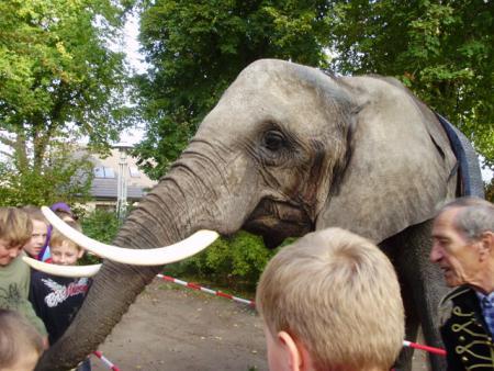 Elefant2010_2