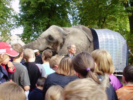 Elefant2010_4