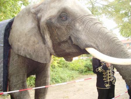 Elefant2010_1