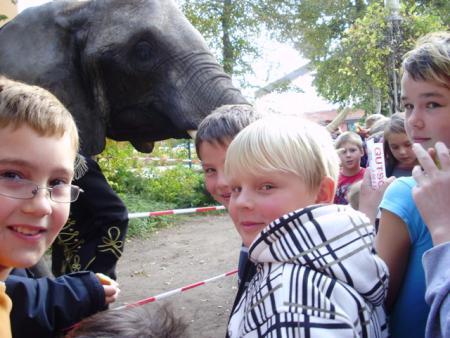 Elefant2010_3