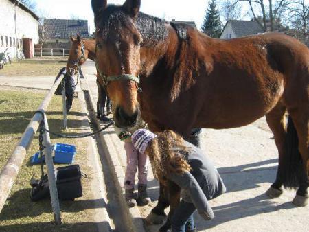 pferde und co