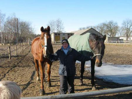 theorie pferde kind