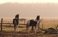 pferde tannhaeuser.jpg