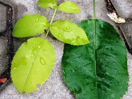 Farbunterschiede einzelner Blätter