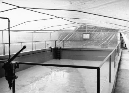 Schwimmbecken der Schule (1)