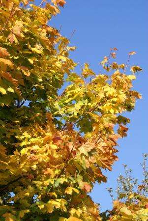 September_bis_November_2008_479