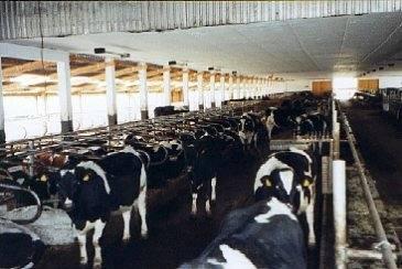 Stall16