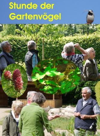 Collage Stunde der Gartenvögel 2011