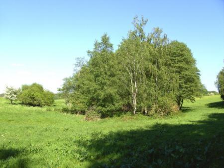 Das Steinmoor (Soll)