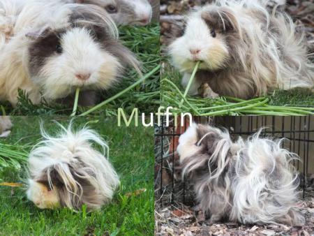 Tiere Muffin