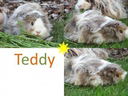 Tiere Teddy