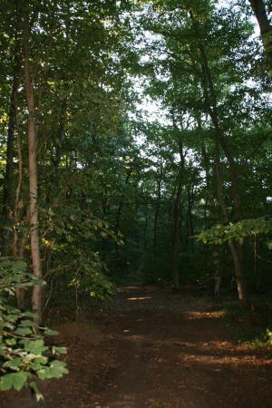 Wald Osterburg 1