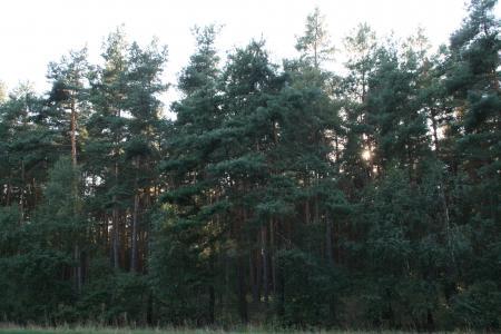 Wald Osterburg 2
