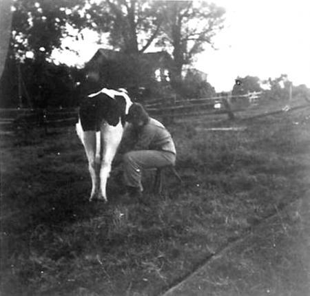 E. Kiesow beim Melken (gegenüber Haus von Wendeborn)