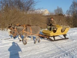 Winterbild mit Schlitten.JPG