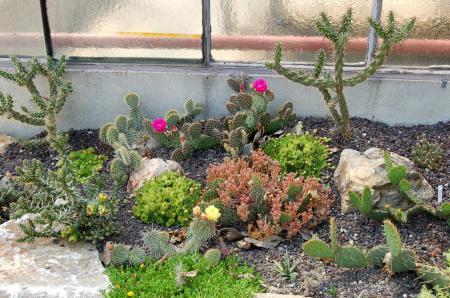 Uhlig kakteen ihr spezialist f r kakteen und andere sukkulente pflanzen - Steingarten anlegen aufbau ...