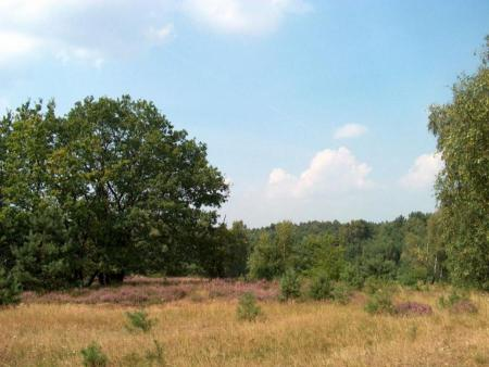 Wulmstorfer Heide