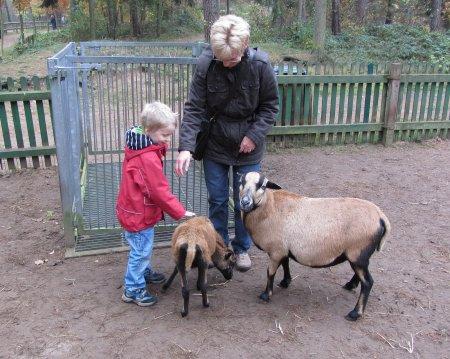 Schafsgehege 1