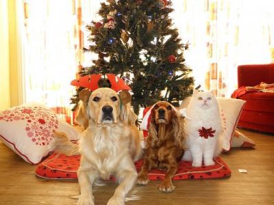 Tierheimweihnacht