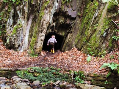 Eingang zur Höhle, Hallo ist da wer!