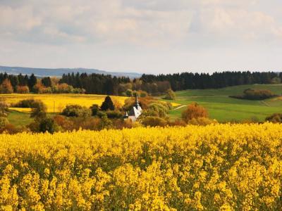 Rapsfelder blühen um die Kirche von Eckweiler