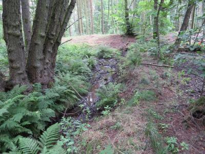 Quellbereich im Stadtwald Labaun (Foto: C. Volkmer)