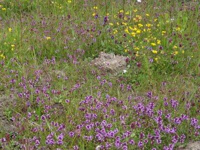 Fotoalbum Wildpflanzen