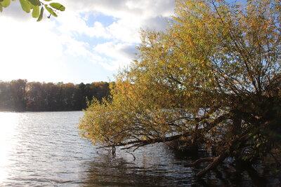 Fotoalbum Herbstidylle am Falkenhagener und am Neuen See