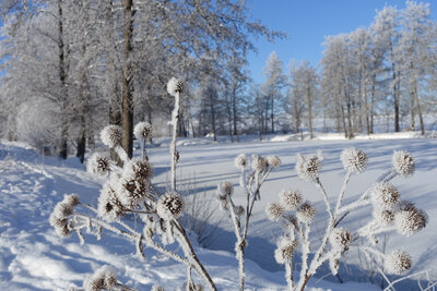 Fotoalbum Winter 2021