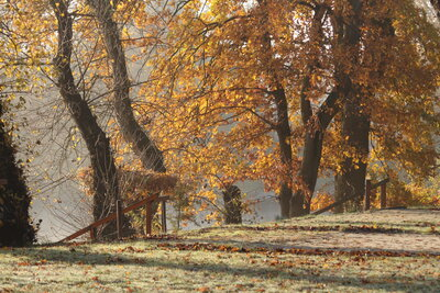 Fotoalbum Herbstimpressionen
