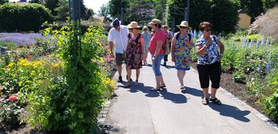 Fotoalbum Zu Besuch bei den Rosen in Bad Langensalza
