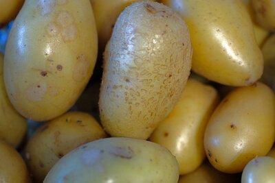 www.find-das-bild.de, Michael Schnell | Alles rund um die Kartoffel