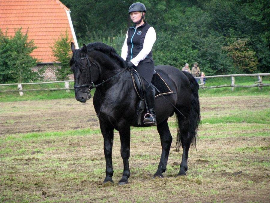 www oldenburger pferde com