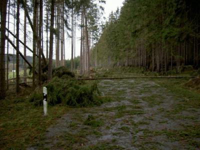 Fotoalbum Auswirkungen Kyrill im Gemeindegebiet