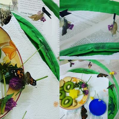 Fotoalbum Raupen werden zu Schmetterlingen - Projekt Klasse 3