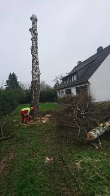 Fotoalbum Birke beim Vereinsheim