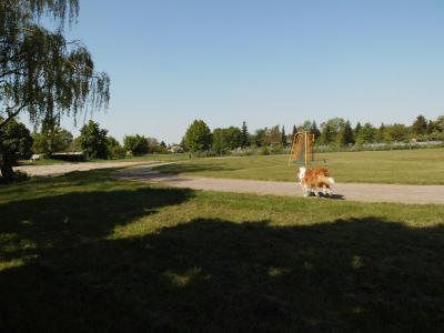 Foto des Albums: Auf den Hund gekommen! (09.05.2018)