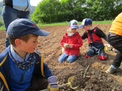 Fotoalbum Vorschulkinder beim Kartoffel setzen