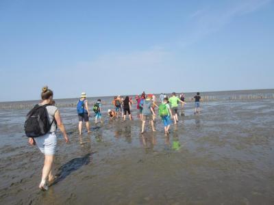 Fotoalbum Ausflug der 4. Klassen: Wattwanderung und Seehundstation