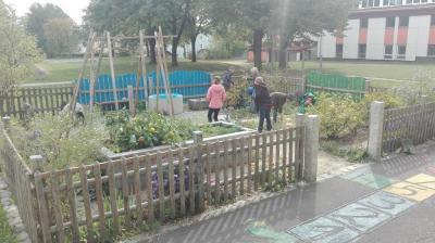 Fotoalbum Erntearbeit im Schulgarten