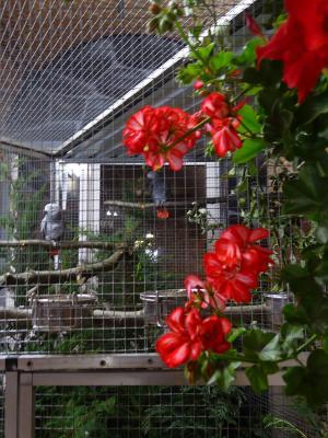 Fotoalbum Vogelausstellung