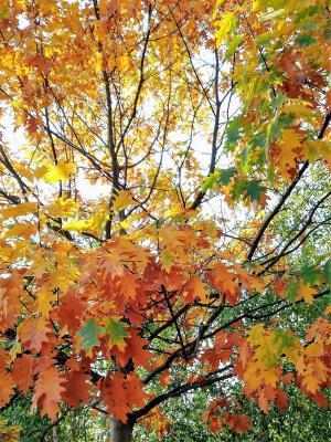 Fotoalbum Herbstlieder im Seniorenheim Andernacher Straße
