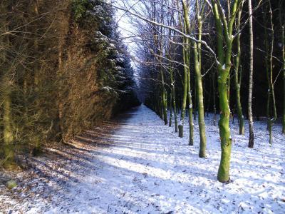 Fotoalbum Winter-Wald in Besdorf