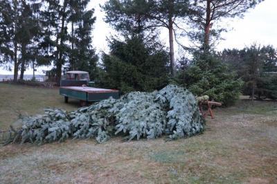 Fotoalbum Wie kommt der Tannenbaum zum Adventsmarkt?