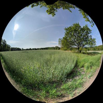 Fotoalbum Waldrallye