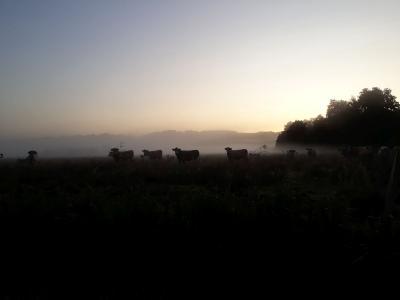 Fotoalbum Sonnenaufgang an der Recknitz