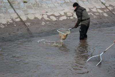 Fotoalbum Talsperre Kelbra – Bergungsfischung durchgeführt
